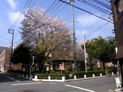 米子駅前駐車場から臨む。