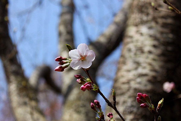 水郷おみがわ桜つつじ祭り