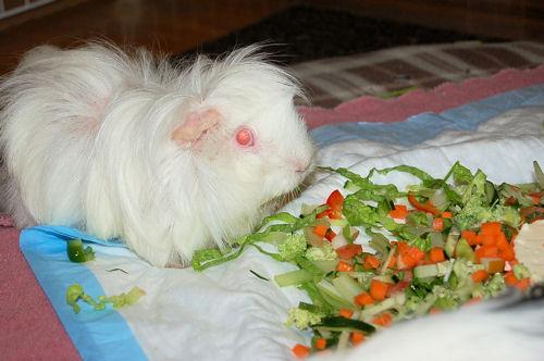 コレ アタシのサラダ