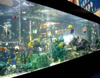 Sony Aquarium 2007