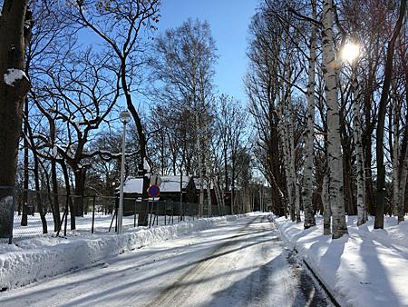北大構内 雪の積もった道