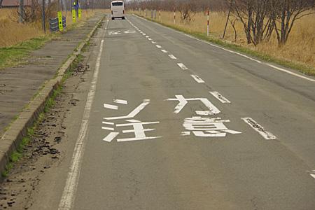 道路の路面に「シカ注意」の文字