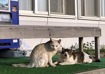 海憧の前の猫2匹