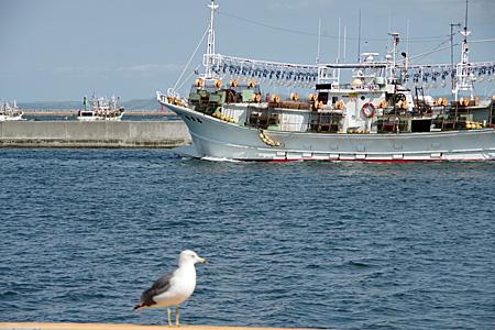 カモメと漁船