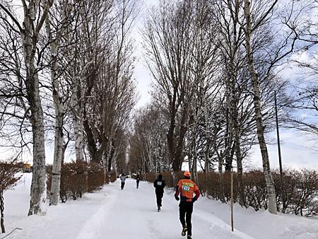 白樺並木の間を走る