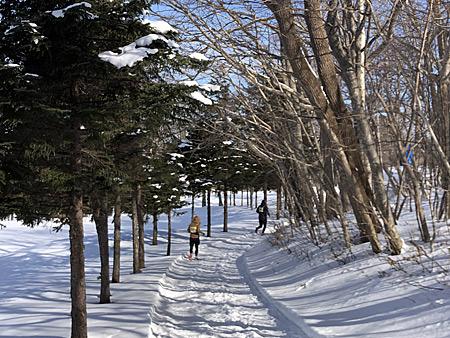 木々の間の雪道