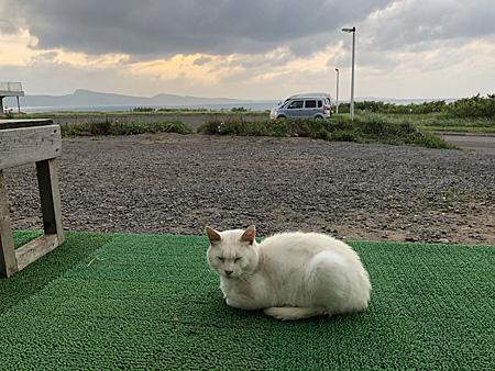 猫と船泊湾