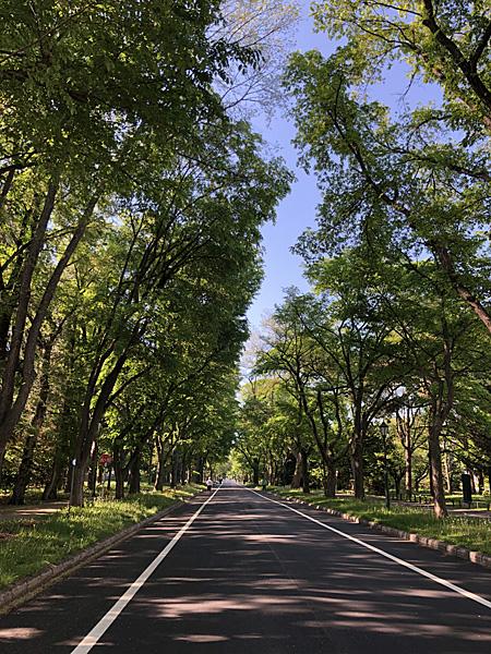 両側の樹木と日陰になった道路