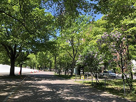大通公園の木陰