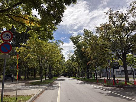 木々に覆われた道路