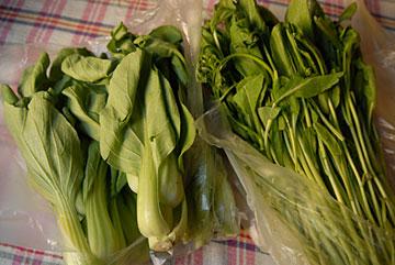チンゲンサイと油心菜