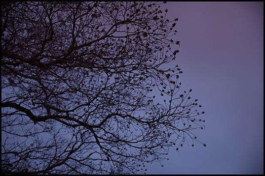 奈良の夕暮れ03