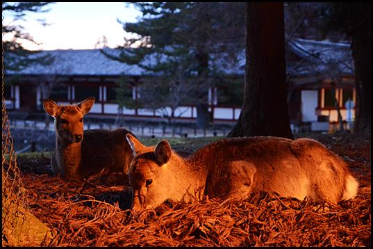 奈良の夕暮れ06