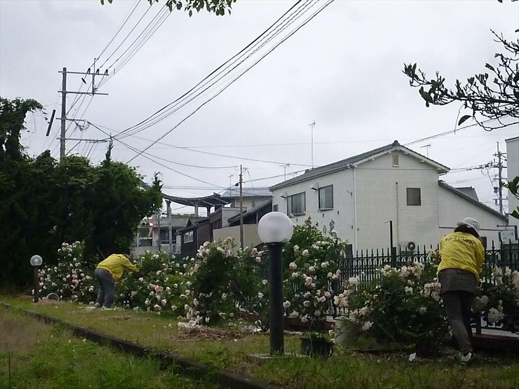 P1040424_R.JPG