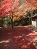 亀山公園で見つけた紅葉のじゅうたん
