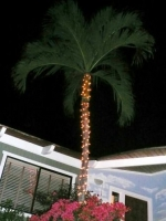 palm chistmas tree