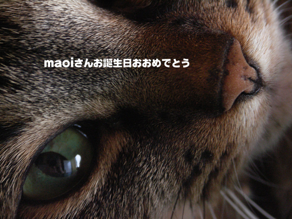 maoiさんお誕生日おめでとう