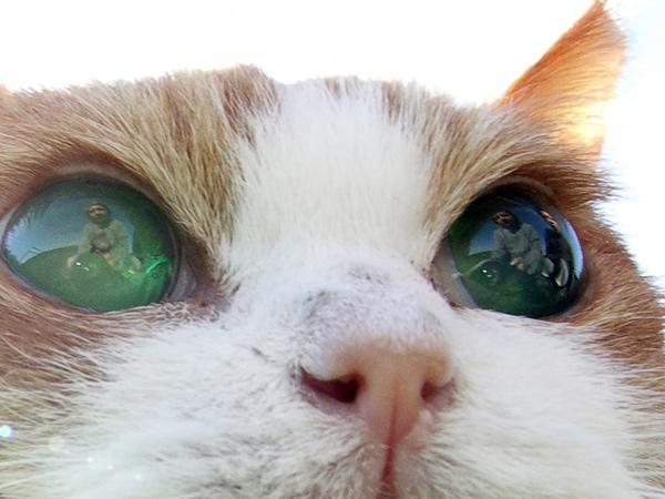 21歳全盲の猫チョキ
