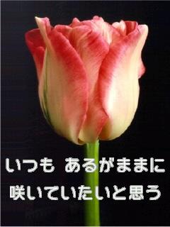 ファイル00060001.jpg