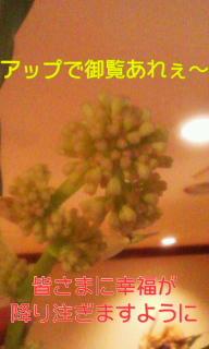 110105_1727~0100010001.jpg