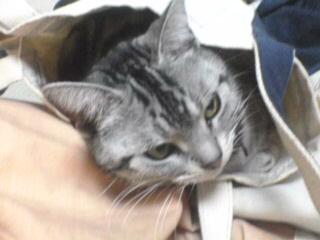 猫袋入り。