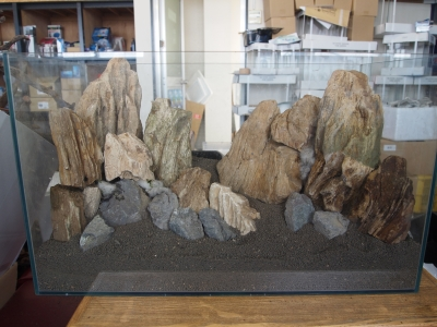 木化石レイアウト