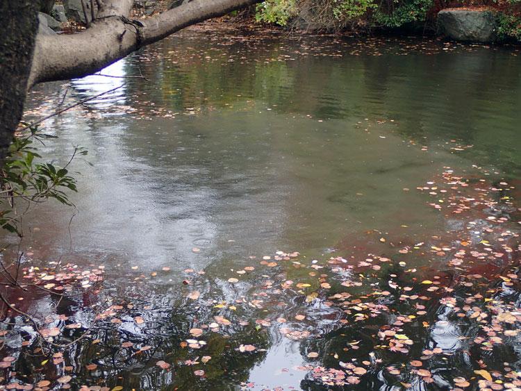 芸大池ポンプ