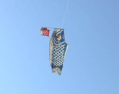 親子鯉のぼり03