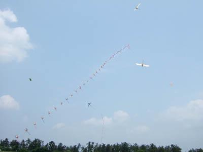 ふくら雀の連凧と鳥凧