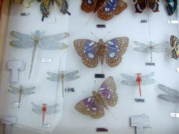 蝶のミニ凧2