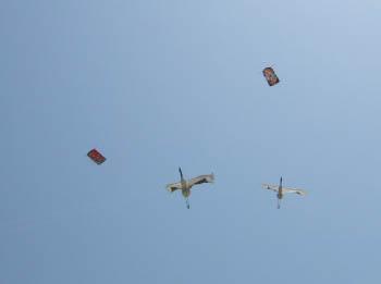 鶴の連凧とだるま