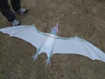 翼竜の骨組み