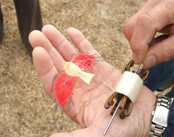 ミニ凧 六郷とんび