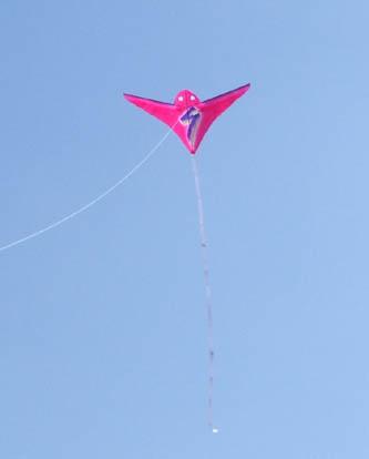 前進翼の鳥凧