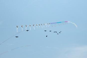 連凧と乱舞する鳥凧