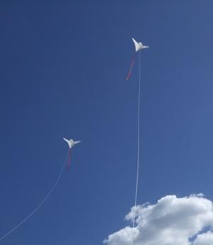 鳥の凧の実験