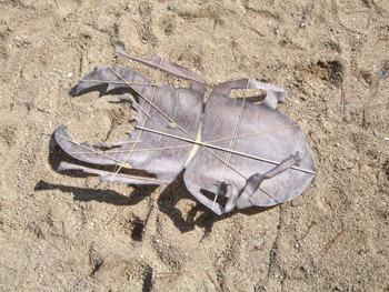 カブトムシの凧 骨組み