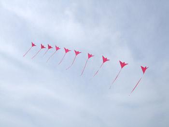 鳥凧の連凧