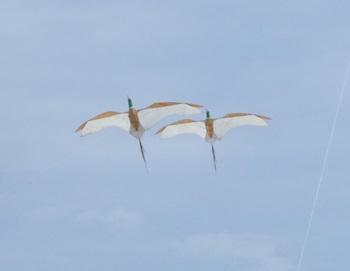 つがいの鳥凧