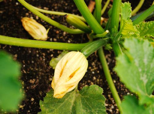 rhubarb08.jpg