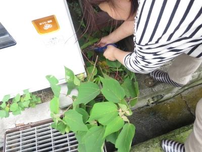 ブラックライト 植物 標本 実験