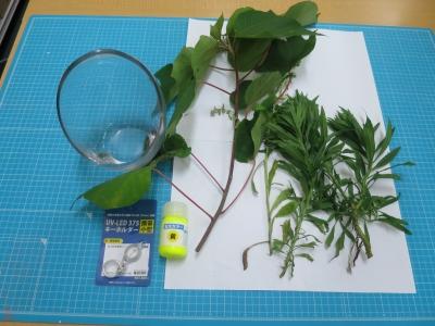 ブラックライト 植物 標本 実験 用意するもの