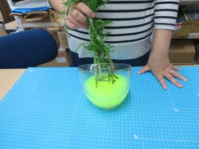 ブラックライト 植物 標本 実験 手順�