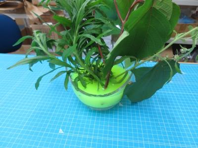 ブラックライト 植物 標本 実験 完成