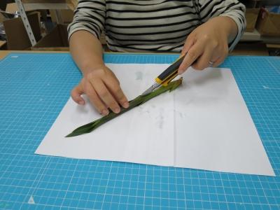 ブラックライト 植物 標本 実験 観葉植物 実践