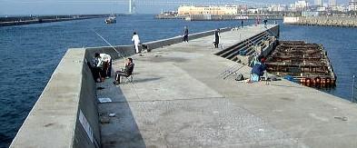 足場が安全な漁港内