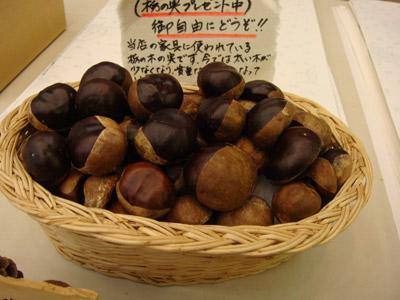 トチ(橡)の実(horse chestnut)