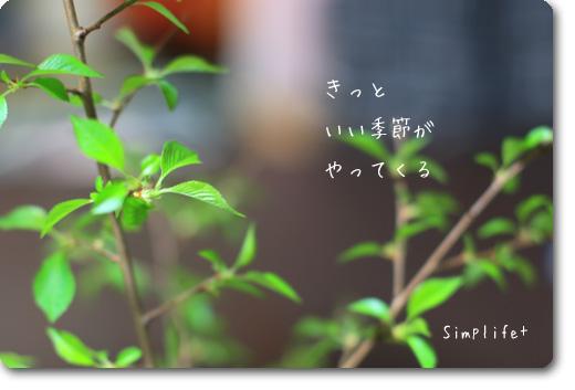 桜の芽生え
