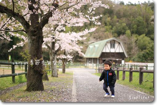 畜産センター桜