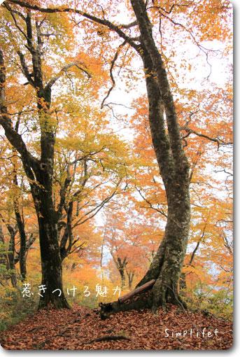 荒島岳紅葉